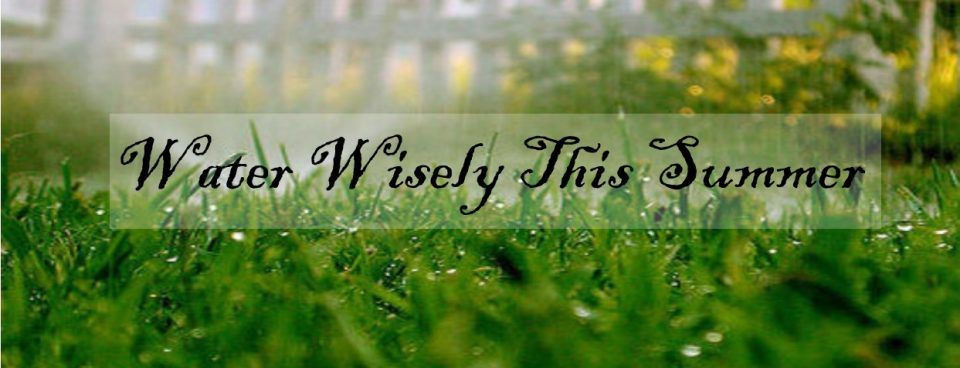 Watering Wisdom for Summer Lawn Care